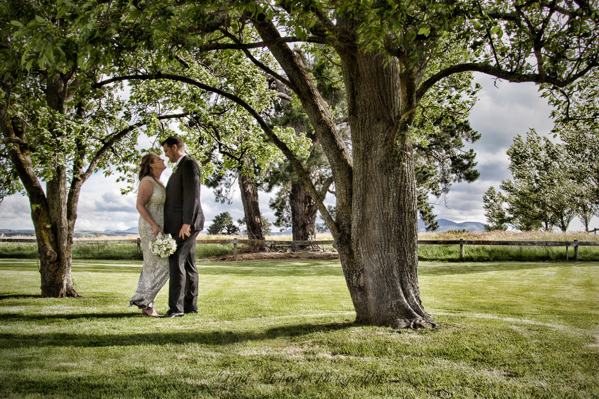 Under the trees in Wairarapa